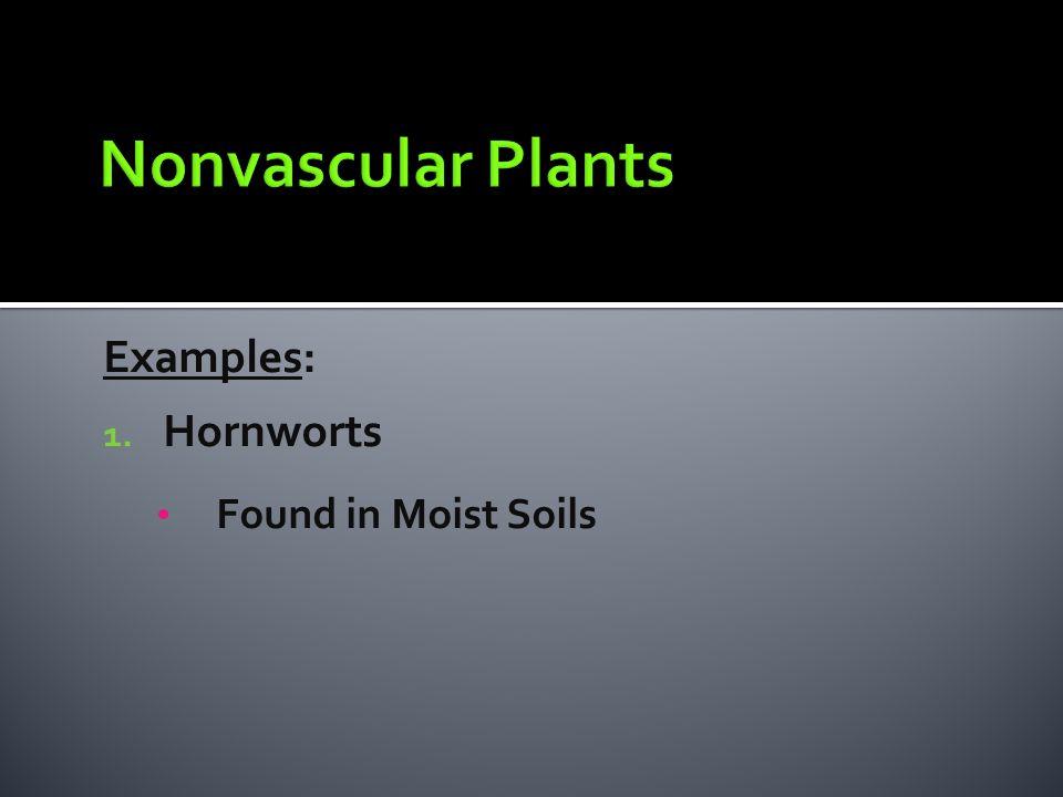 Nonvascular Plants Examples: Hornworts Found in Moist Soils