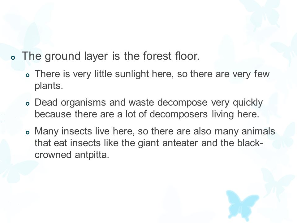 The ground layer is the forest floor.