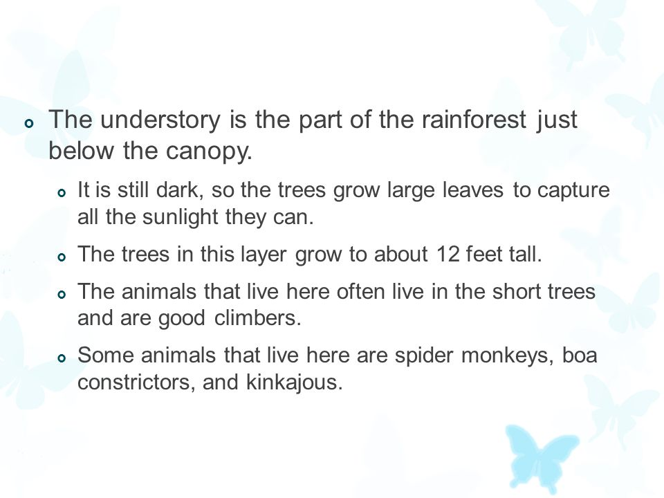 The understory is the part of the rainforest just below the canopy.