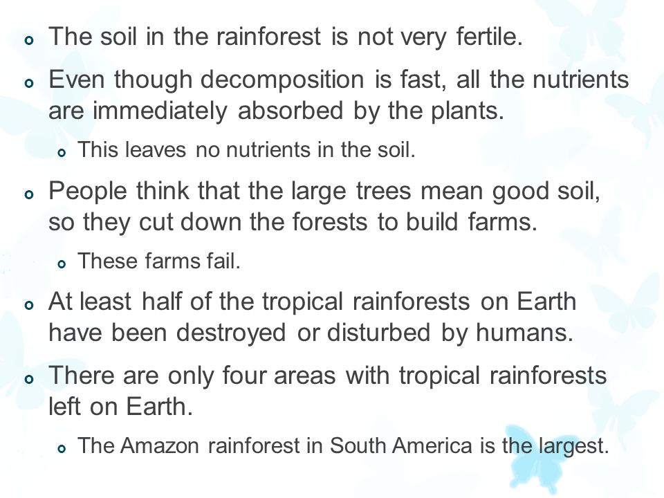 The soil in the rainforest is not very fertile.
