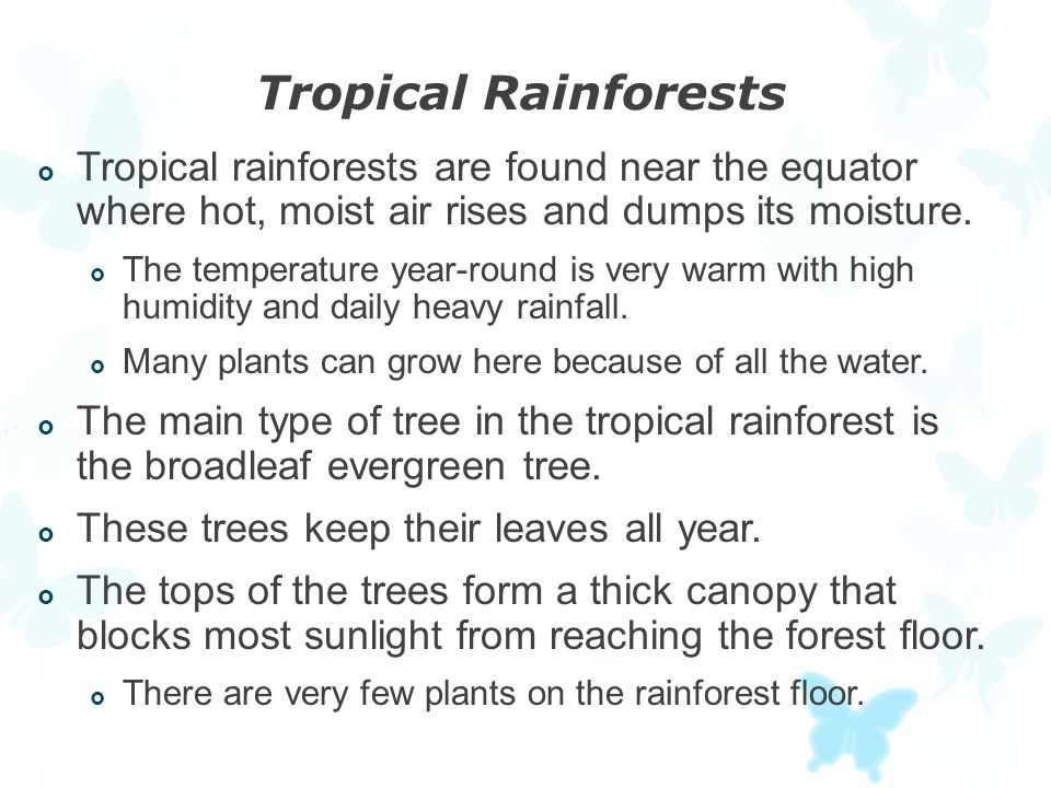 Tropical Rainforests Tropical rainforests are found near the equator where hot, moist air rises and dumps its moisture.