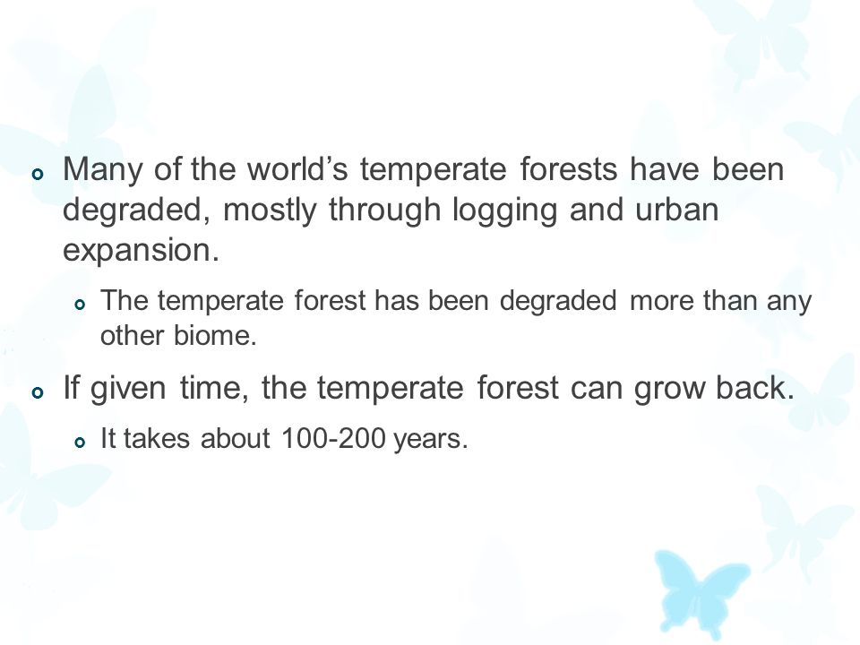 If given time, the temperate forest can grow back.