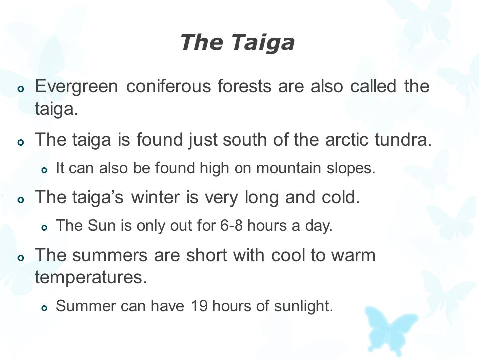 The Taiga Evergreen coniferous forests are also called the taiga.