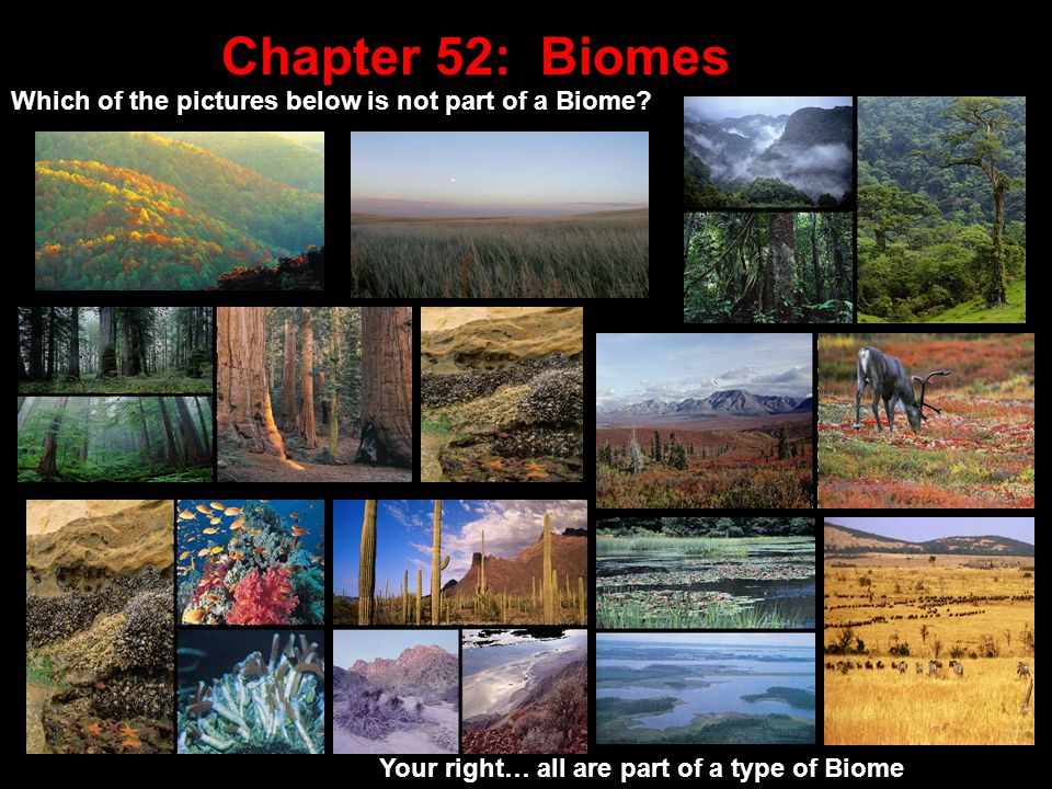 Chapter 52: Biomes Which of the pictures below is not part of a Biome