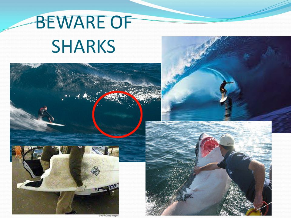 BEWARE OF SHARKS