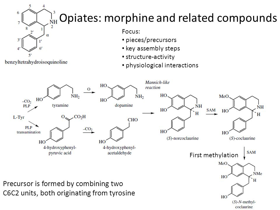 Opiates: morphine and related compounds
