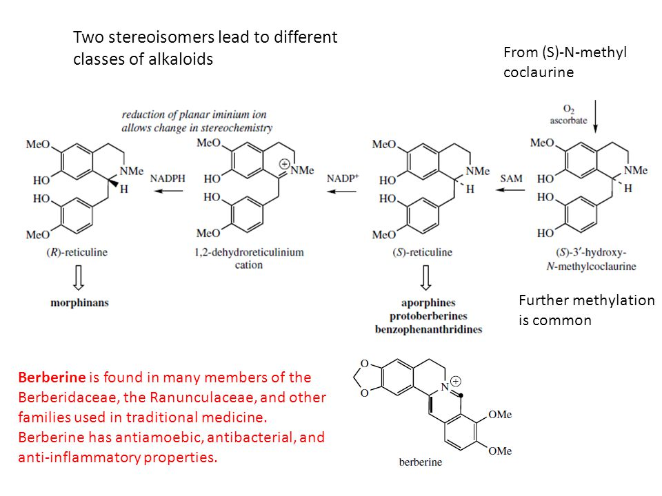 Two stereoisomers lead to different classes of alkaloids