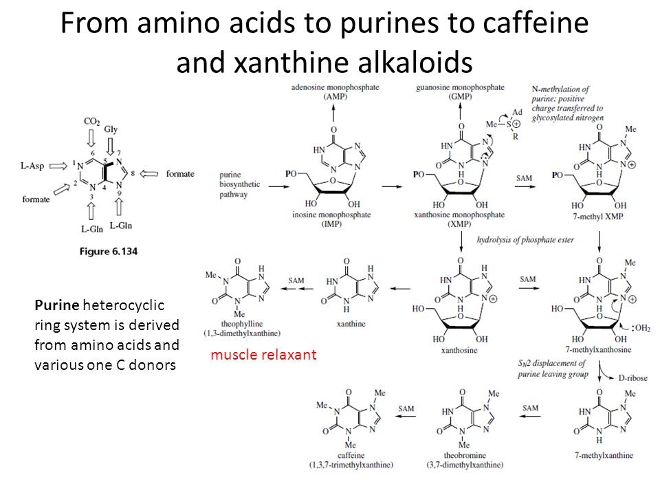 From amino acids to purines to caffeine and xanthine alkaloids