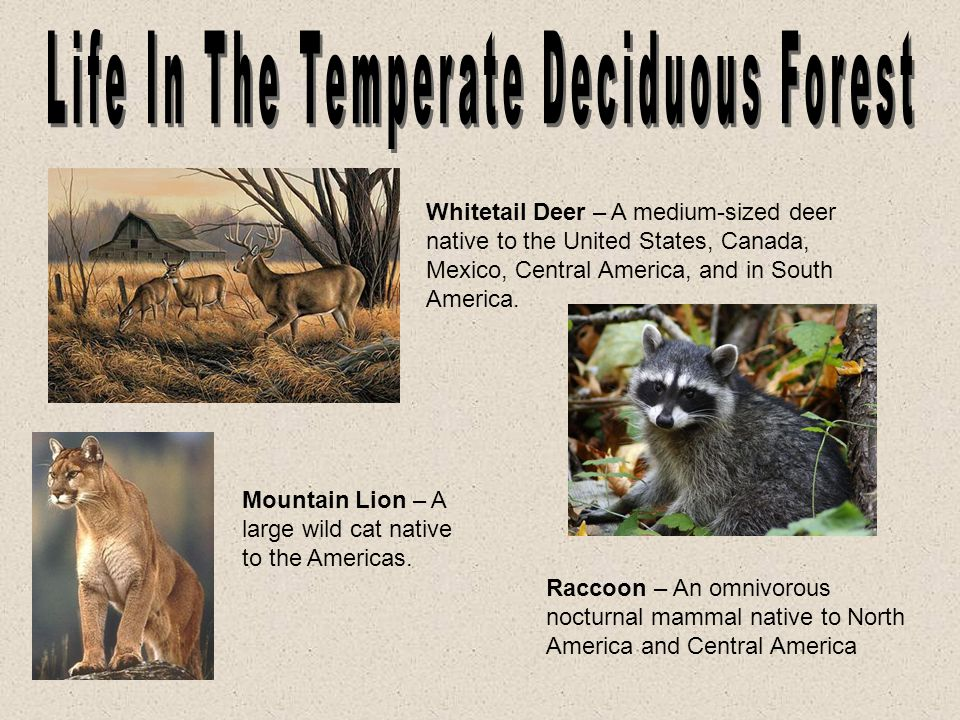 Life In The Temperate Deciduous Forest