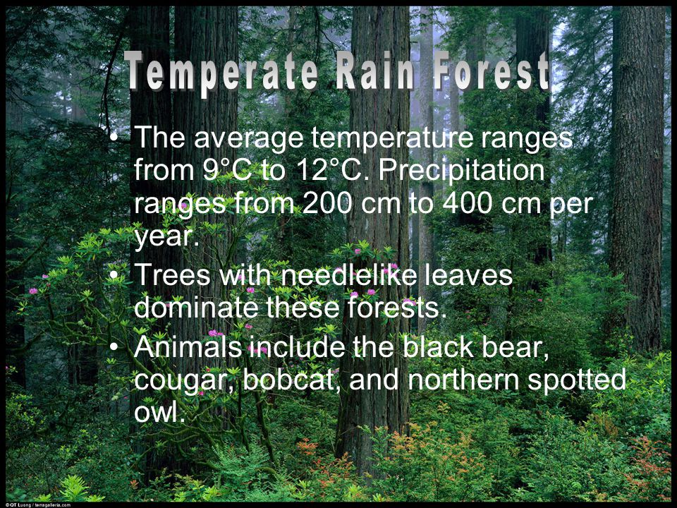 Temperate Rain Forest The average temperature ranges from 9°C to 12°C. Precipitation ranges from 200 cm to 400 cm per year.
