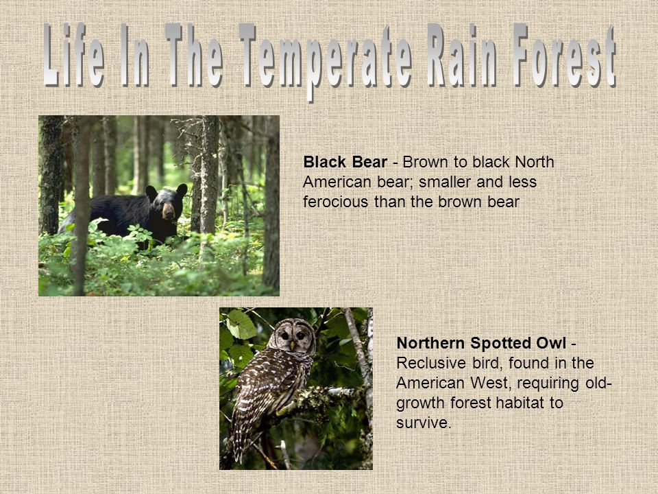 Life In The Temperate Rain Forest