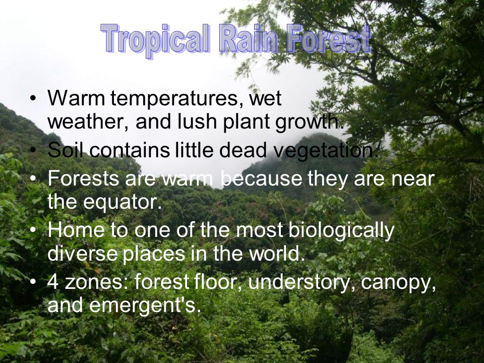 Tropical Rain Forest Warm temperatures, wet weather, and lush plant growth. Soil contains little dead vegetation.