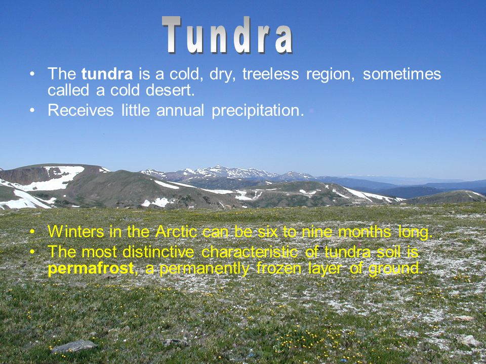 Tundra The tundra is a cold, dry, treeless region, sometimes called a cold desert. Receives little annual precipitation.