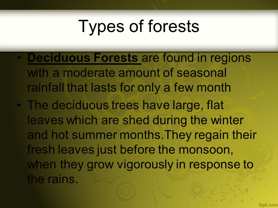 Types of forests Deciduous Forests are found in regions with a moderate amount of seasonal rainfall that lasts for only a few month.