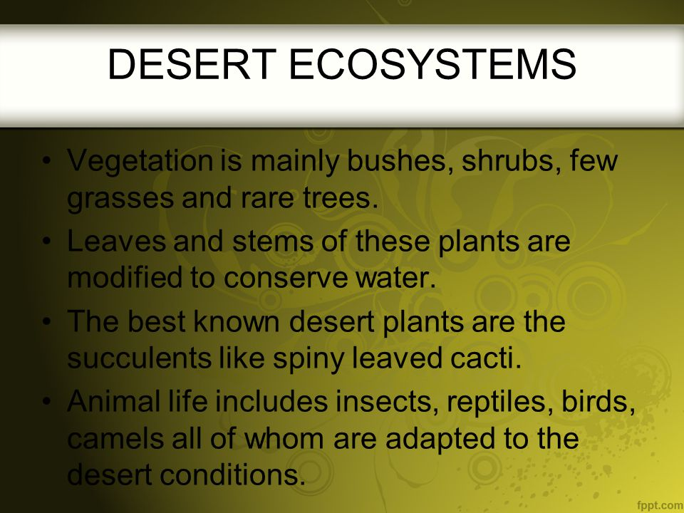 DESERT ECOSYSTEMS Vegetation is mainly bushes, shrubs, few grasses and rare trees. Leaves and stems of these plants are modified to conserve water.