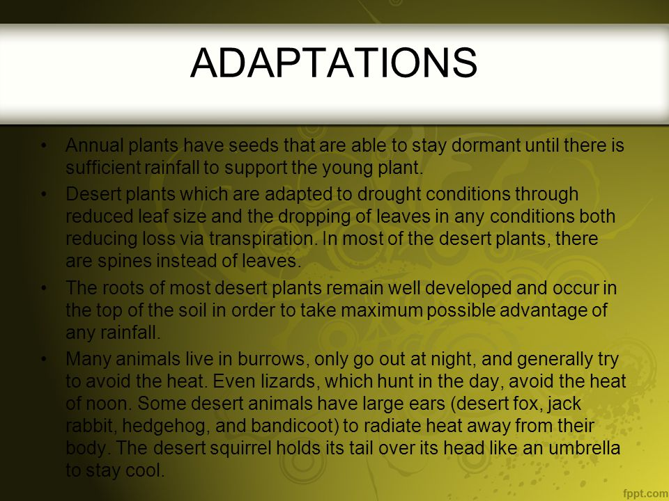 ADAPTATIONS Annual plants have seeds that are able to stay dormant until there is sufficient rainfall to support the young plant.