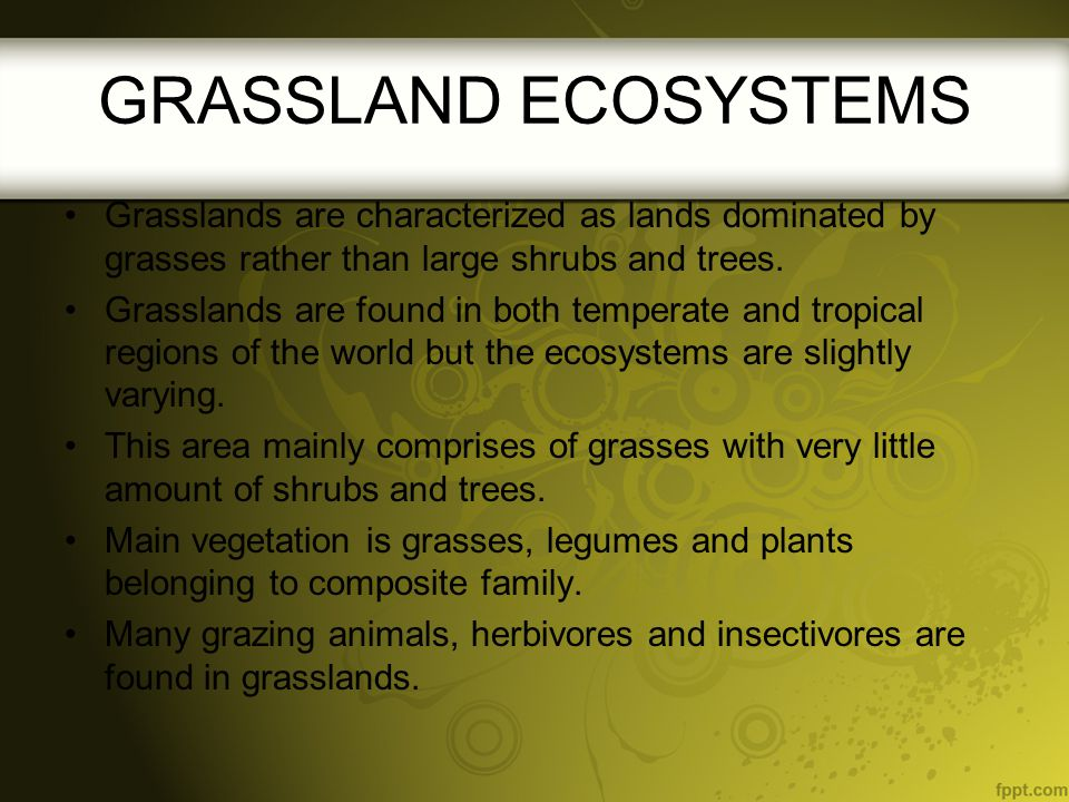 GRASSLAND ECOSYSTEMS Grasslands are characterized as lands dominated by grasses rather than large shrubs and trees.