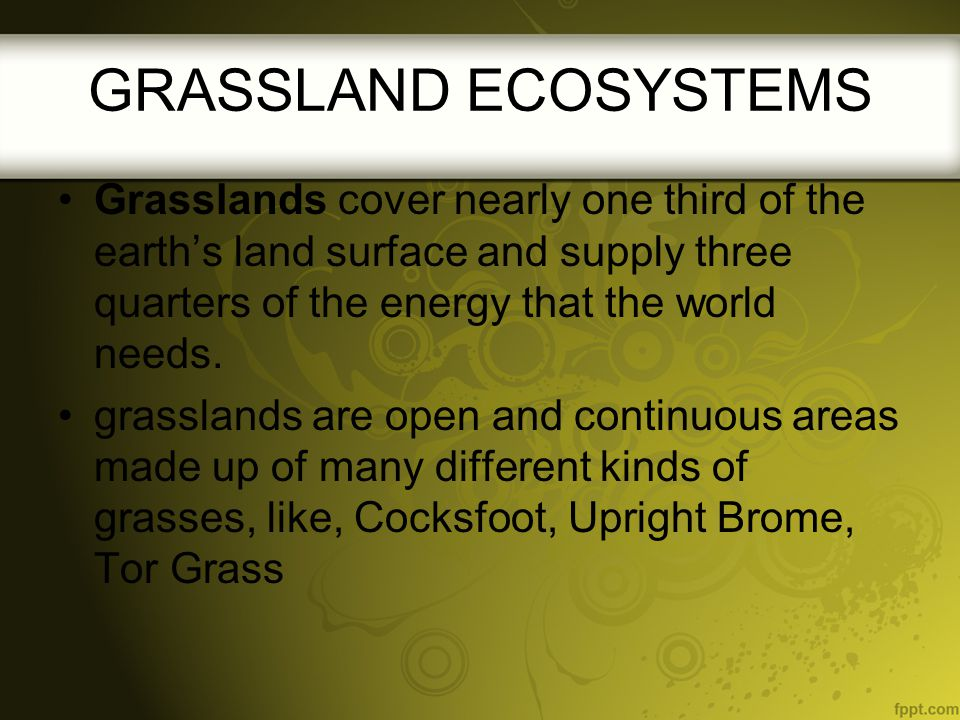 GRASSLAND ECOSYSTEMS Grasslands cover nearly one third of the earth's land surface and supply three quarters of the energy that the world needs.