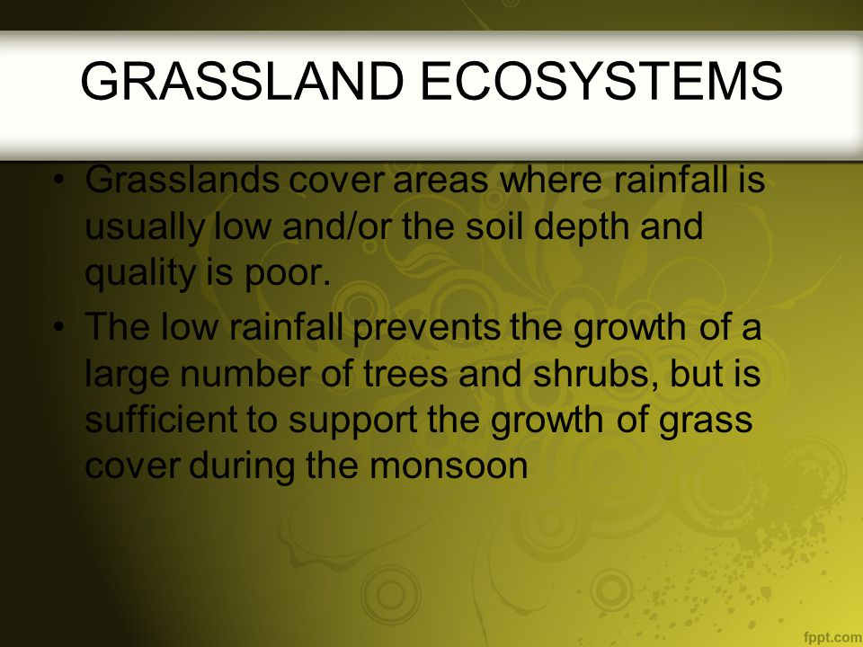 GRASSLAND ECOSYSTEMS Grasslands cover areas where rainfall is usually low and/or the soil depth and quality is poor.