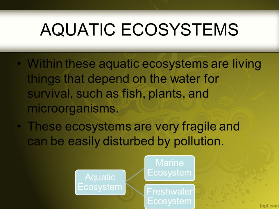 AQUATIC ECOSYSTEMS Within these aquatic ecosystems are living things that depend on the water for survival, such as fish, plants, and microorganisms.