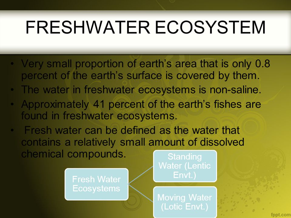 FRESHWATER ECOSYSTEM Very small proportion of earth's area that is only 0.8 percent of the earth's surface is covered by them.
