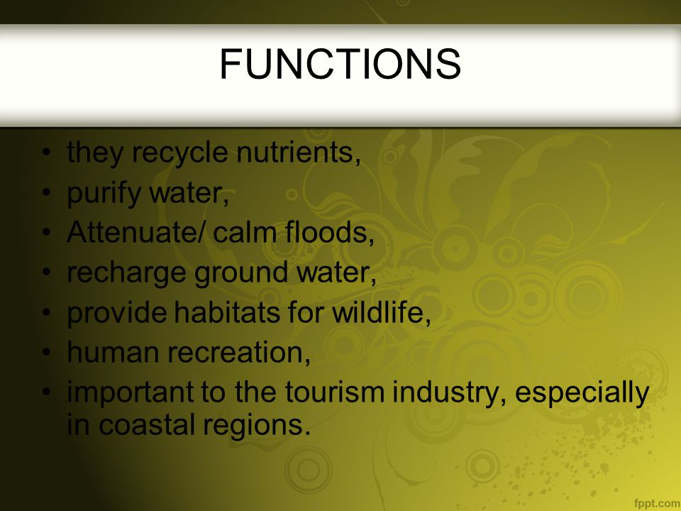 FUNCTIONS they recycle nutrients, purify water,