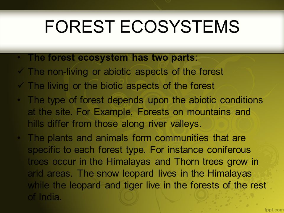 FOREST ECOSYSTEMS The forest ecosystem has two parts: