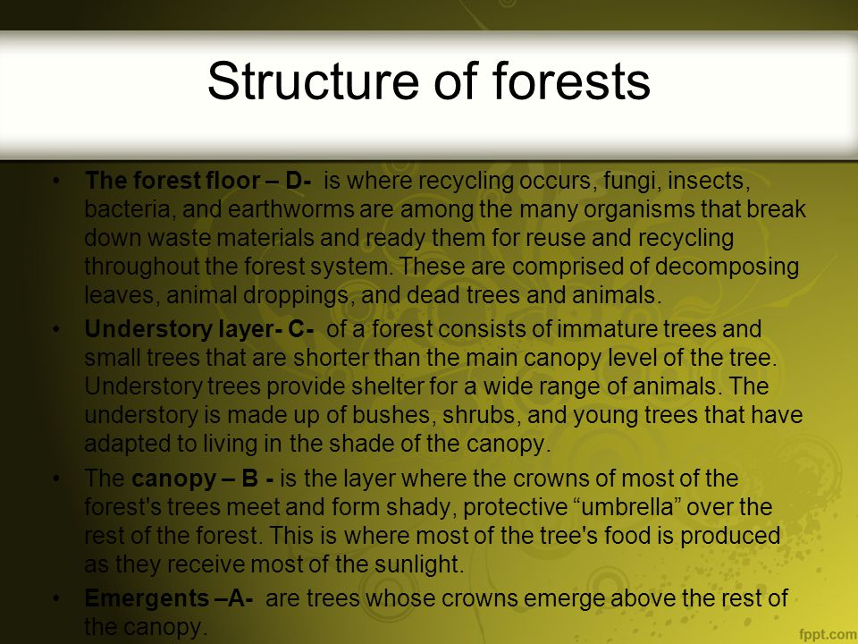 Structure of forests