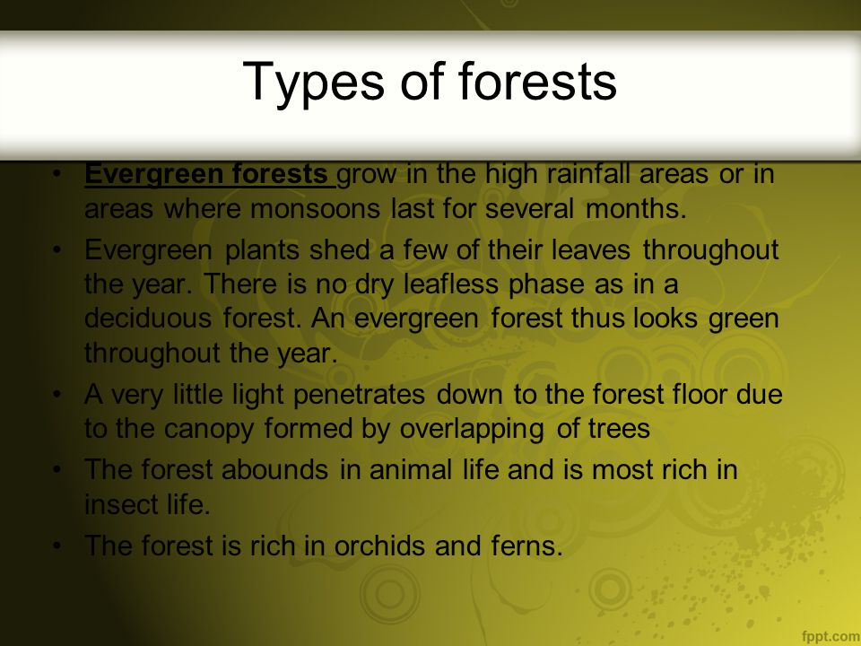 Types of forests Evergreen forests grow in the high rainfall areas or in areas where monsoons last for several months.