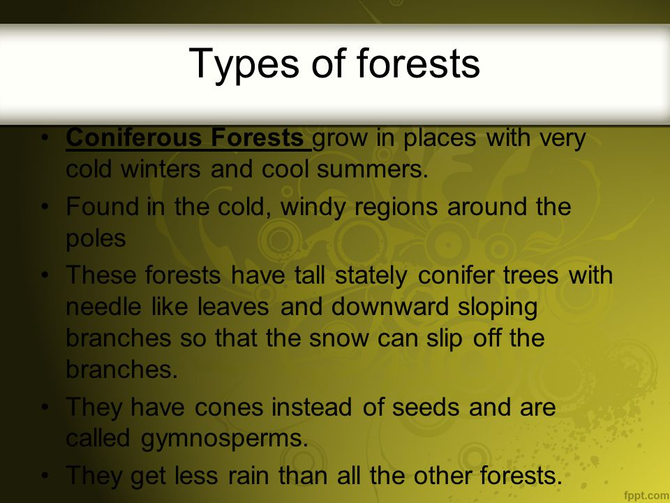 Types of forests Coniferous Forests grow in places with very cold winters and cool summers. Found in the cold, windy regions around the poles.
