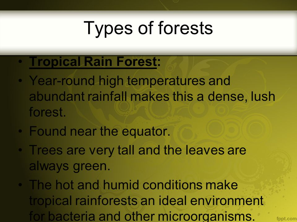 Types of forests Tropical Rain Forest: