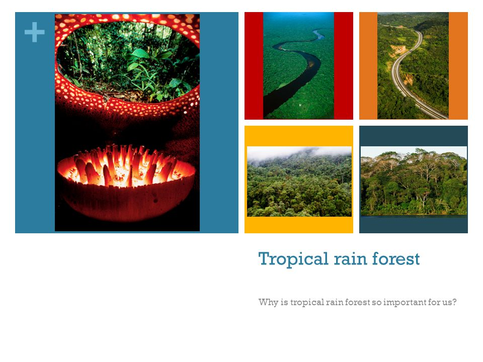 Why is tropical rain forest so important for us