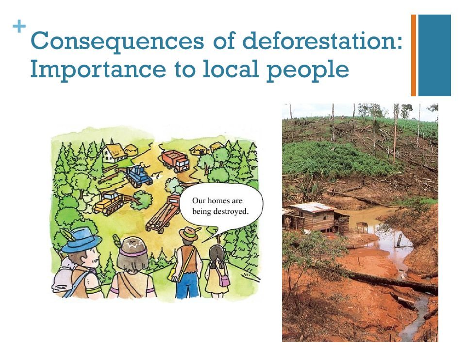 Consequences of deforestation: Importance to local people