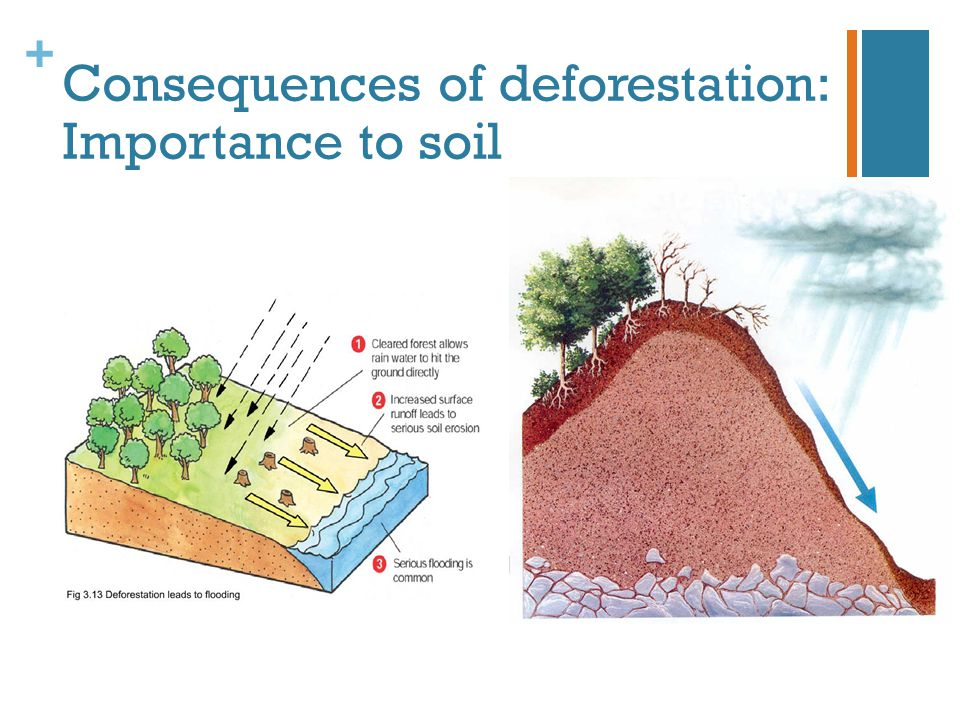 Consequences of deforestation: Importance to soil