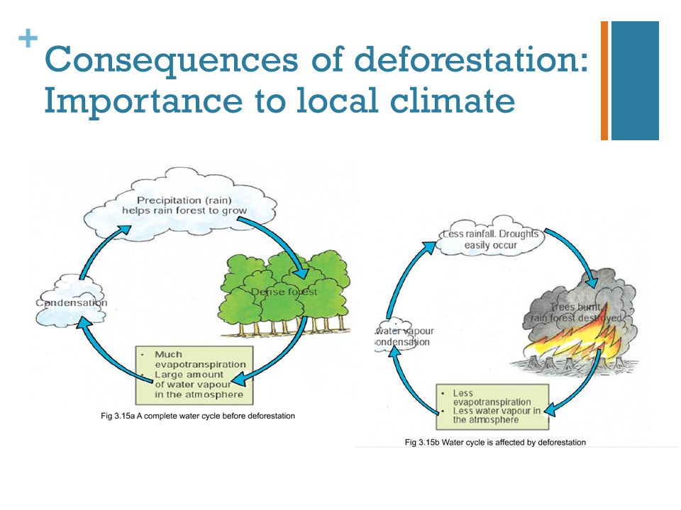 Consequences of deforestation: Importance to local climate