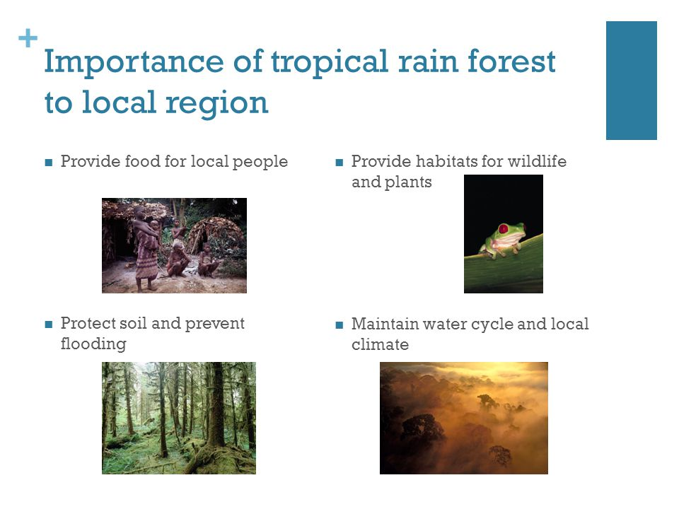 importance of rain Tropical rain forests exist in a belt ranging from the tropic of cancer to the tropic of capricorn around the earth's equator rain forests cover only 2% of the earth.
