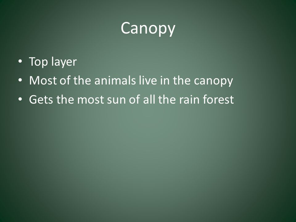 Canopy Top layer Most of the animals live in the canopy