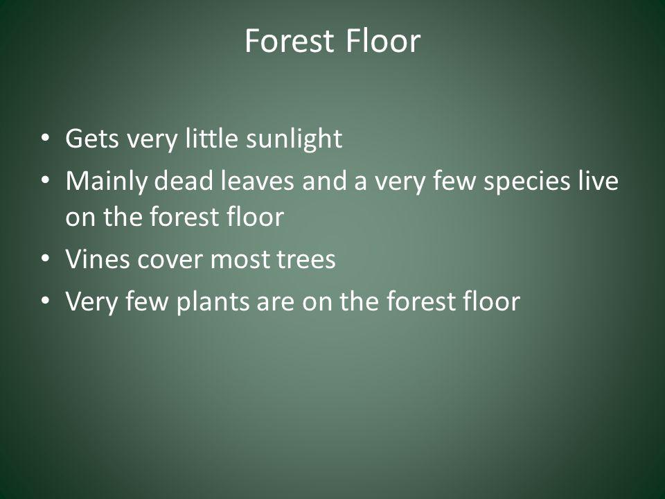 Forest Floor Gets very little sunlight