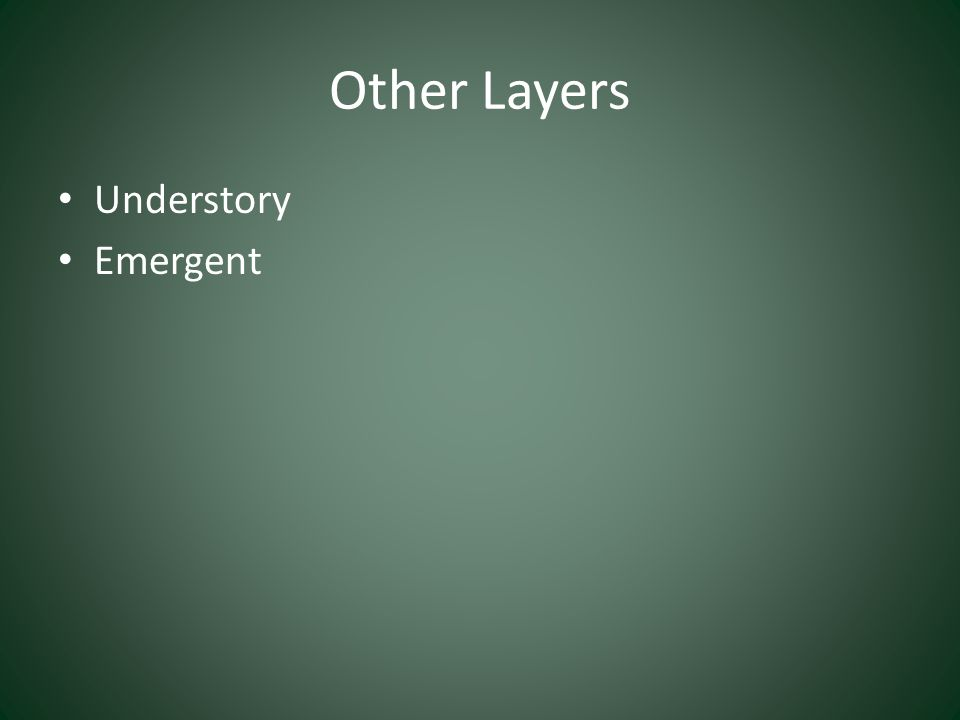 Other Layers Understory Emergent