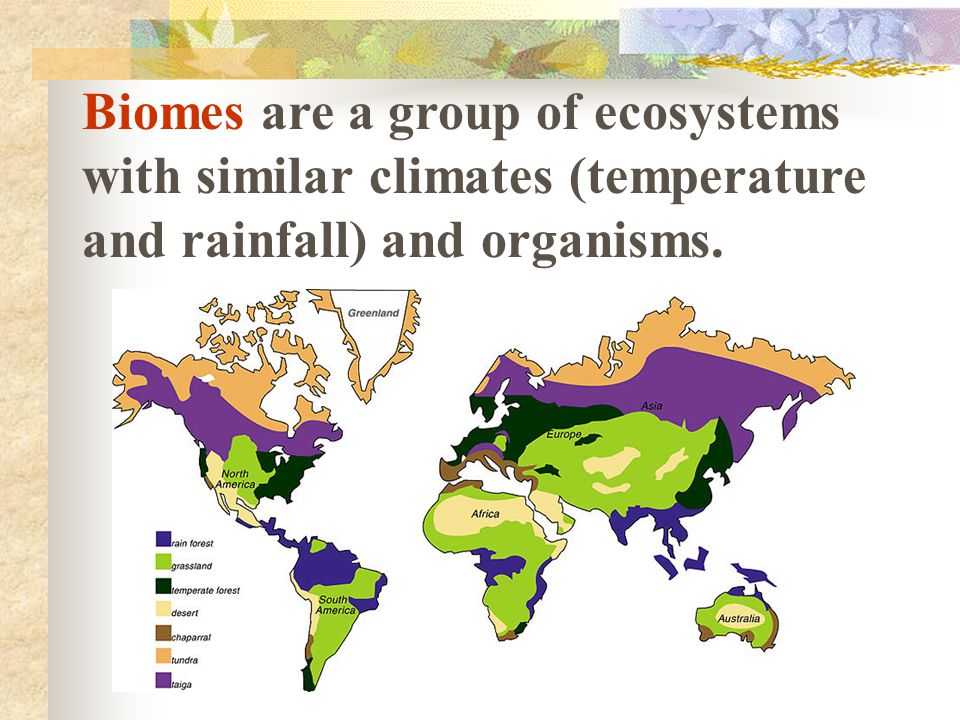 Biomes are a group of ecosystems with similar climates (temperature and rainfall) and organisms.
