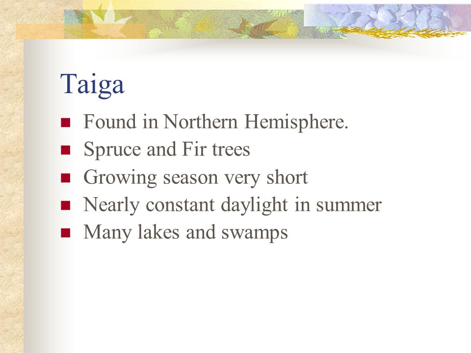 Taiga Found in Northern Hemisphere. Spruce and Fir trees