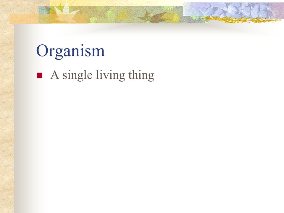 Organism A single living thing