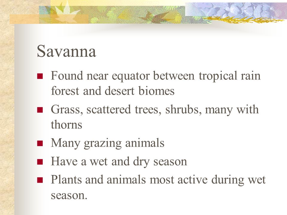 Savanna Found near equator between tropical rain forest and desert biomes. Grass, scattered trees, shrubs, many with thorns.