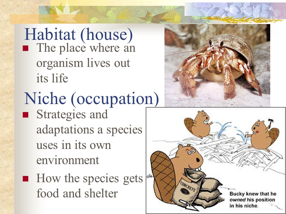 Habitat (house) Niche (occupation)