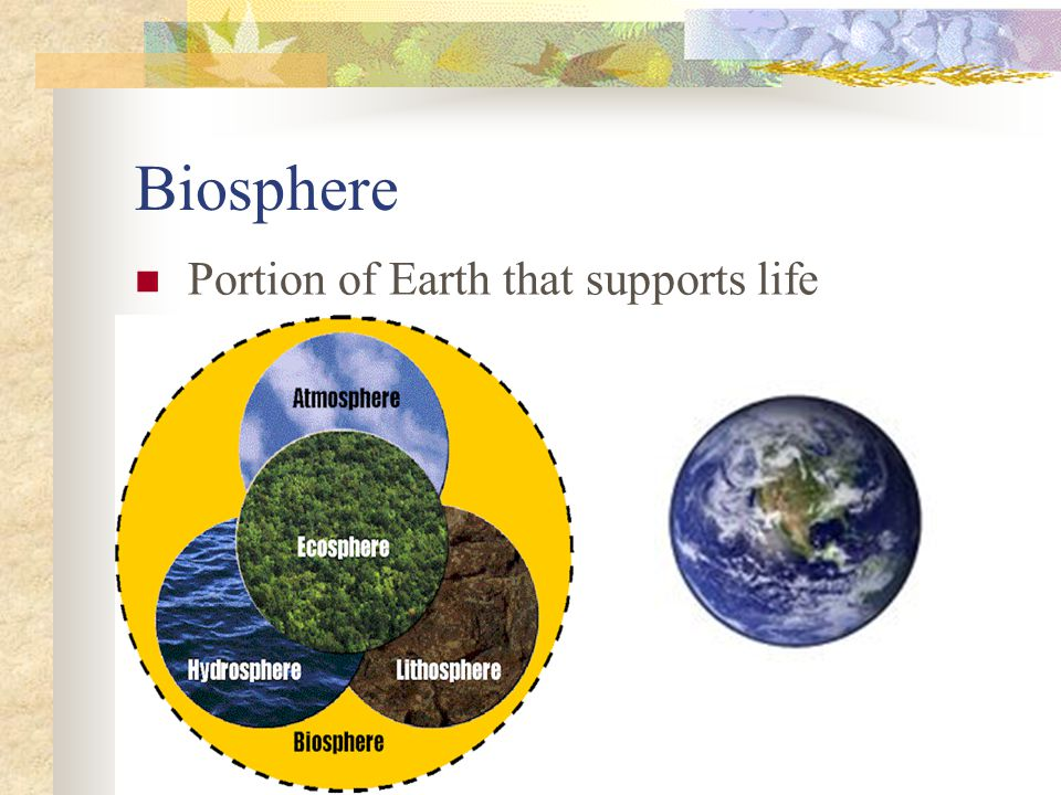 Biosphere Portion of Earth that supports life