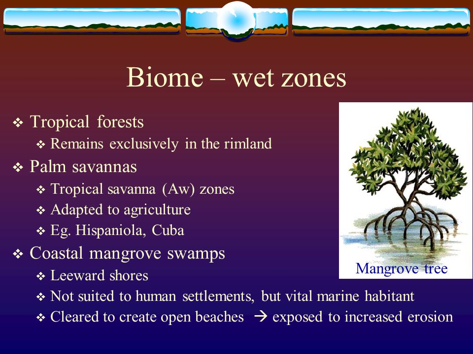 Biome – wet zones Tropical forests Palm savannas