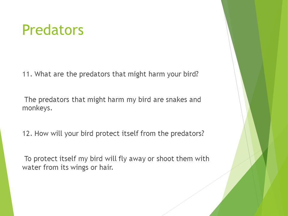 Predators 11. What are the predators that might harm your bird