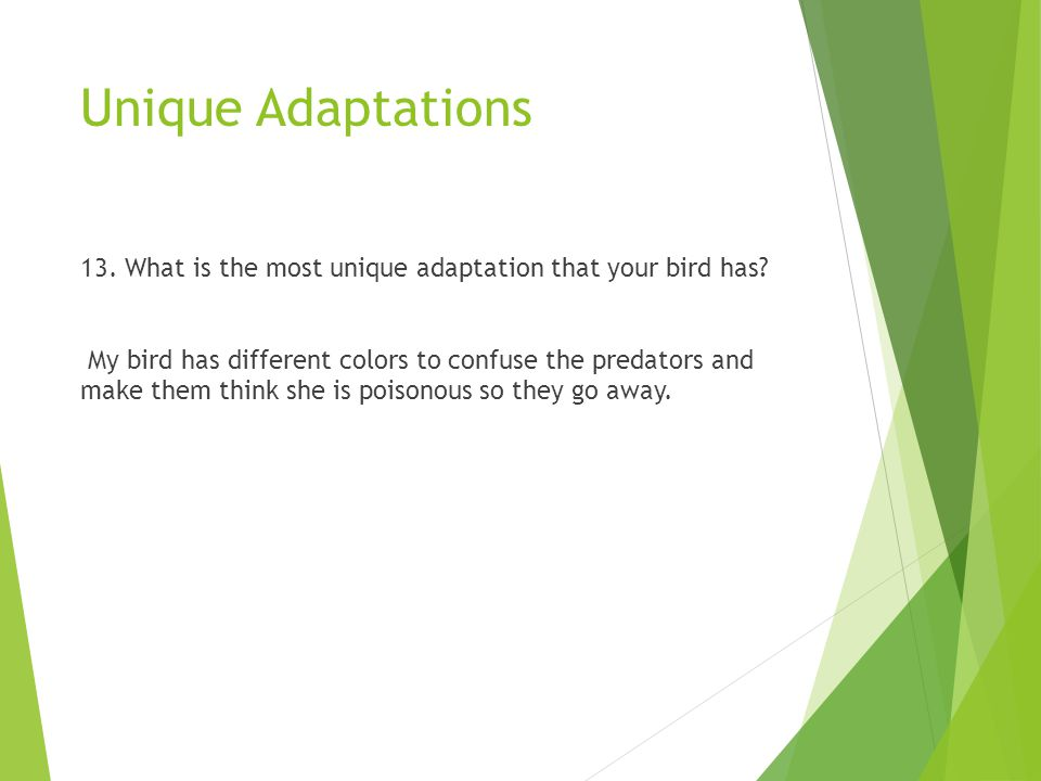 Unique Adaptations 13. What is the most unique adaptation that your bird has