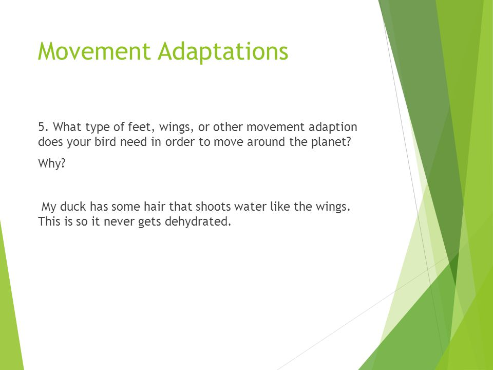 Movement Adaptations