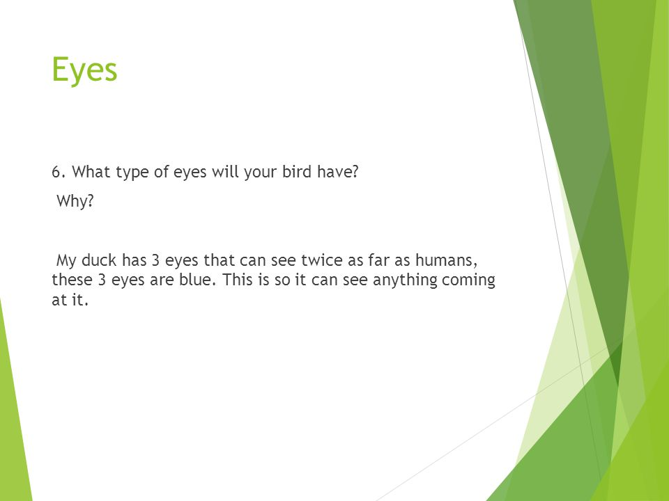Eyes 6. What type of eyes will your bird have Why